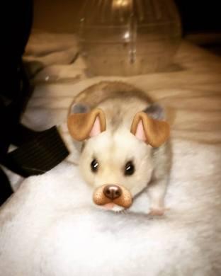 Hamster or dog..?