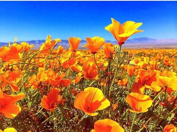 antelope-valley-california-poppy-reserve.jpg